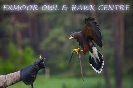 Flying Hawk- Exmoor Holiday Cottages